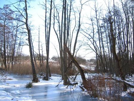 überflutete Bäume