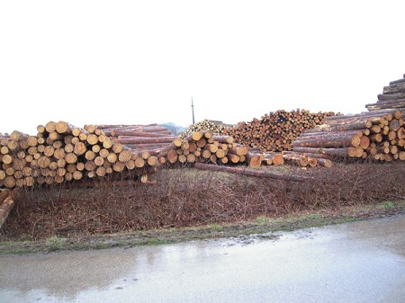 Gesunde Holzstämme