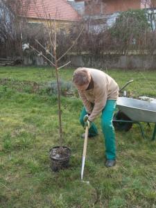 Frühjahr 2014 erste Baumpflanzung