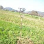 Junge Obstbäume
