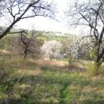 Einsamer blühender Baum