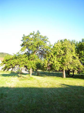 Gesunde Bäume