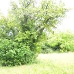 Überwucherter Baum