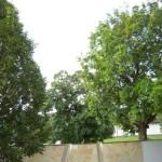 Herrliche Bäume