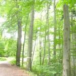 Gesunder Baumbestand