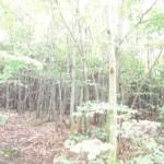 Gerodetes Waldstück