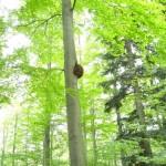 Besonderer Baum