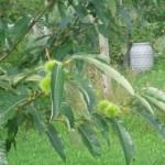 LLebensbaum für Enkeltochter