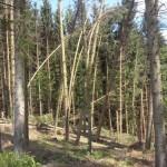 Kaputter Wald