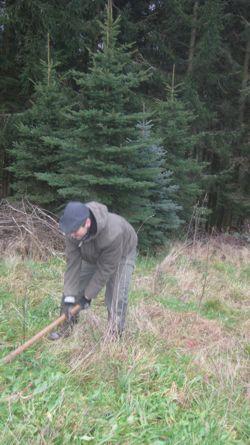 Bild zum Artikel  Aufforstung  eines Waldes