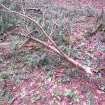 Abgebrochene Baumwipfel