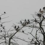 Vogelkolonie