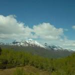 Jungwälder