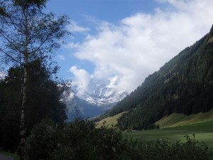 Gesunde Waldlandschaft
