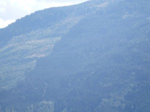 Waldschlägerungen