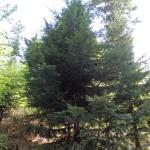 Internationaler Baumtag