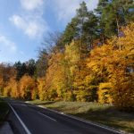 Bunter Herbsrwald
