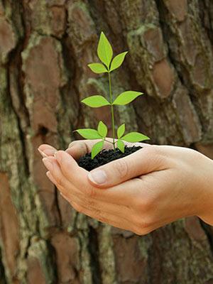 Umweltschutz: Mein Baum, Pflanzaktion