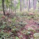 Waldrodung