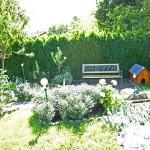 Garten-Nektarinenbaum-0629