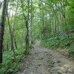 Gesunder Wald Wanderweg 262