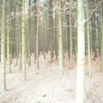 Gepflegter-Wald