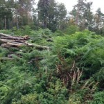 sinnlos gerodeter Wald